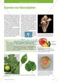 Pflanzen: beobachten und dokumentieren Preview 2