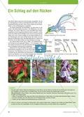 Pflanzen blühen Preview 1