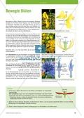 Pflanzen blühen Preview 2