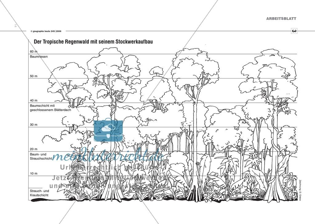 Der Regenwald: Kurzpräsentationen halten Preview 4