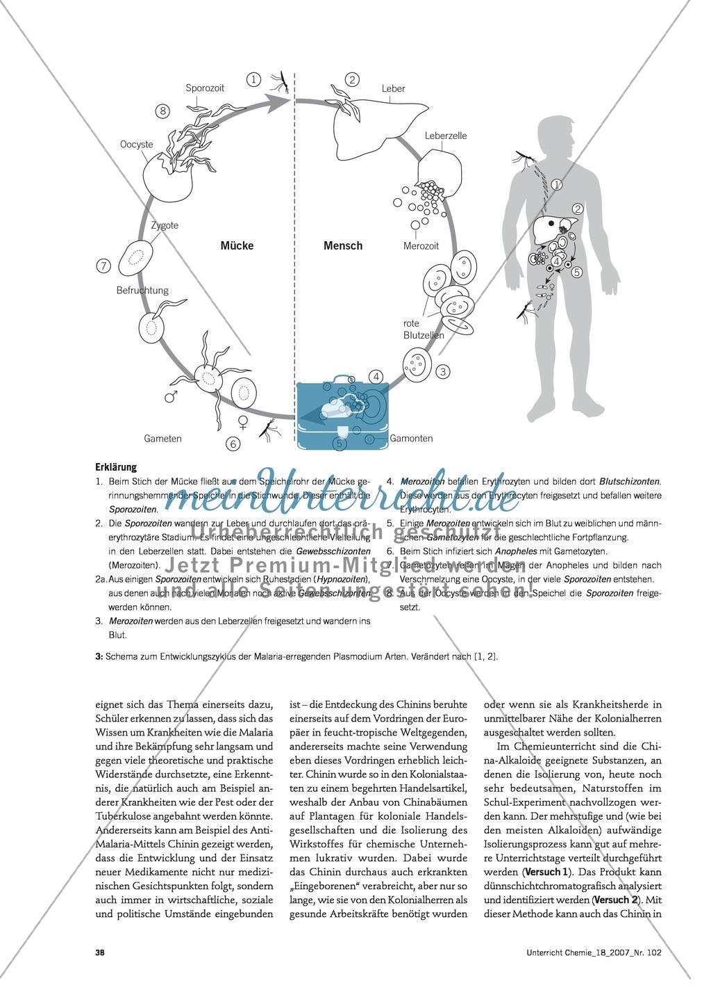 Die Malaria-Erkrankung und die Wirkung von Chinin Preview 2