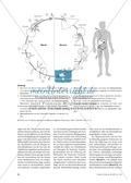 Die Malaria-Erkrankung und die Wirkung von Chinin Thumbnail 2