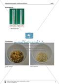 Versuch mit Körnern als Erweiterung des Kugelteilchenmodells Preview 4