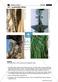 China - Länderkunde: Topografie + Klimazonen + Landwirtschaft Thumbnail 4