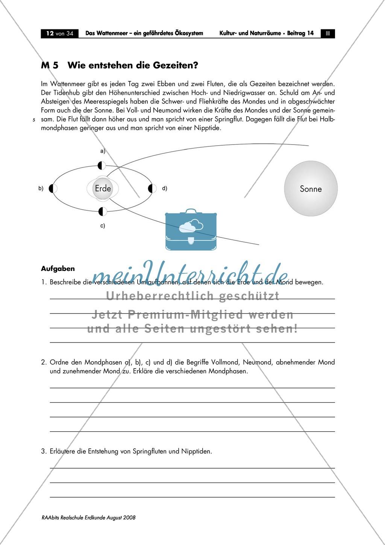 Ökosystem Wattenmeer: Die Gezeiten. - meinUnterricht