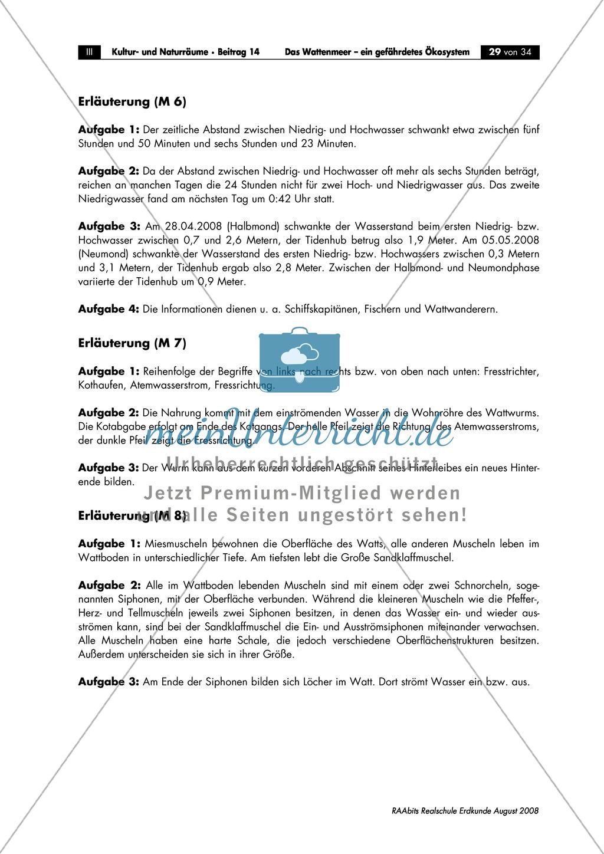 Ökosystem Wattenmeer:  Die Gezeiten. Preview 3