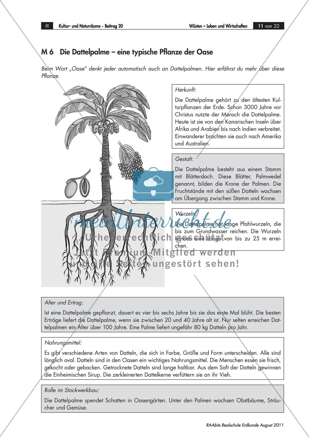 Funktion von Oasen in Wüsten: Oasentypen + Unterschiede + ...
