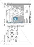 Kopiervorlage zum Klima des Kontinents Afrika: Lückentexte + Klimadiagramme + Karten Thumbnail 15