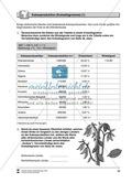 Die Landwirtschaft in Afrika spielerisch kennen lernen: Nutzpflanzen + Kakaoproduktion Thumbnail 4