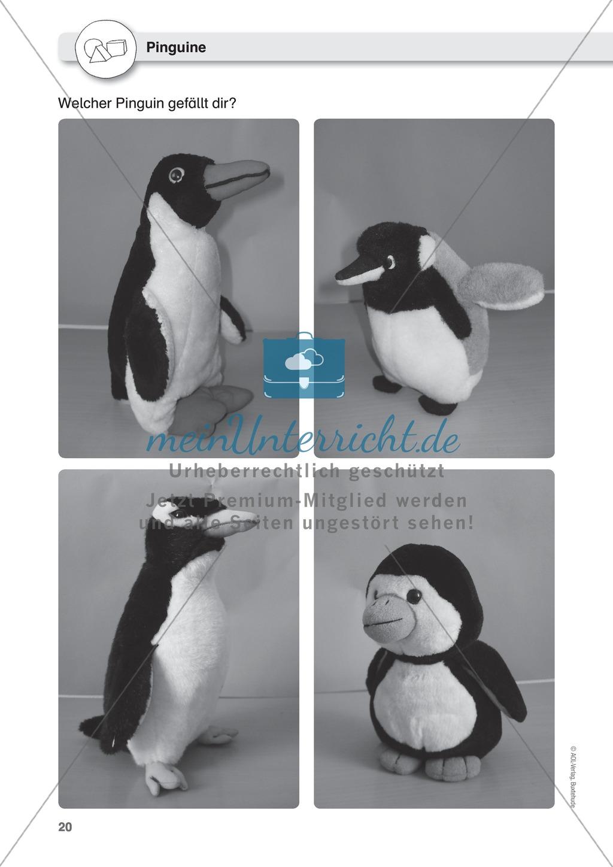 Gegenstände beschreiben - Türen-Domino, Beschreiben üben an Pinguinen, Puppen Preview 4