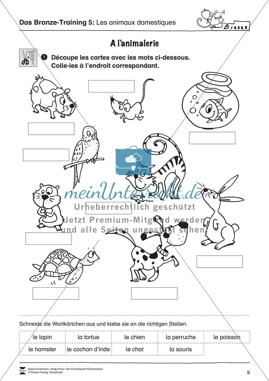 Der Französisch-Führerschein: Die Tiere - meinUnterricht