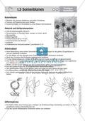 Gestalten mit Papier: Sonnenblumen Preview 4