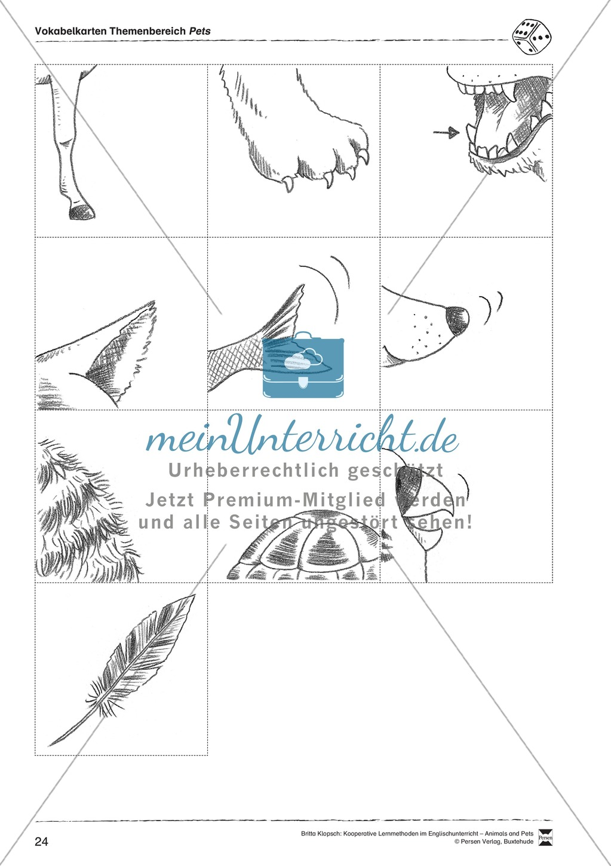 Kooperatives Lernen: Themenbereich Pets + Kopiervorlagen Preview 13