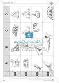 Kooperatives Lernen: Themenbereich Pets + Kopiervorlagen Thumbnail 15