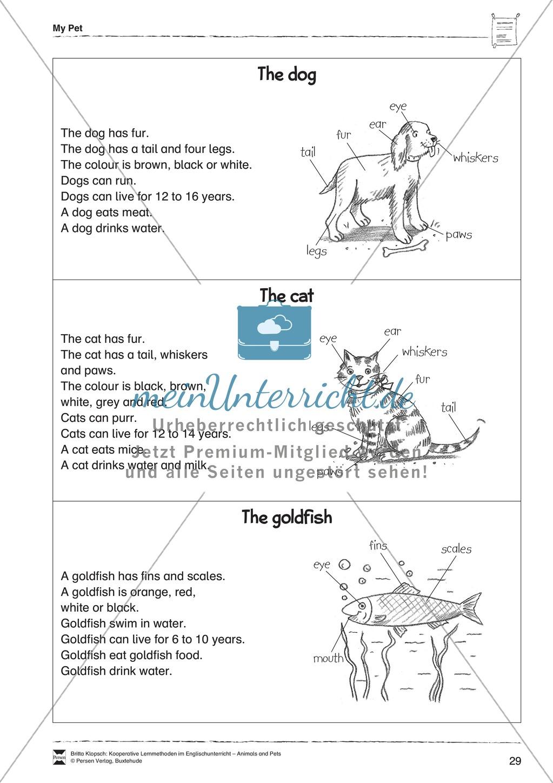 Kooperatives Lernen: Themenbereich Pets + Kopiervorlagen Preview 18