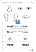 The body vocabulary: Worksheets on the body (Binnendifferenziert) Preview 8