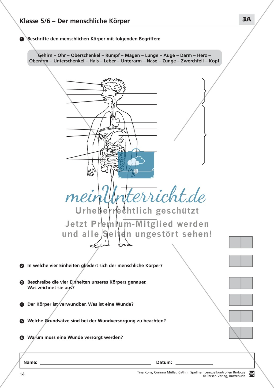 LZK Klasse 5/6 zum Thema menschlicher Körper - meinUnterricht