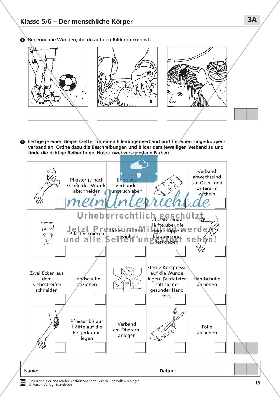 LZK Klasse 5/6 zum Thema menschlicher Körper Preview 2