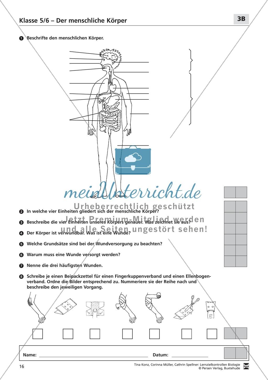 LZK Klasse 5/6 zum Thema menschlicher Körper Preview 3