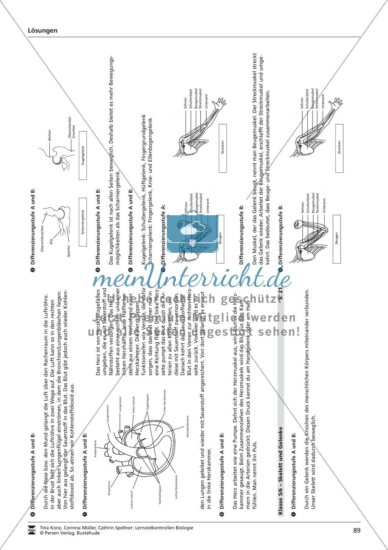 LZK Klasse 5/6 zum Thema Atmung und Herz Preview 6