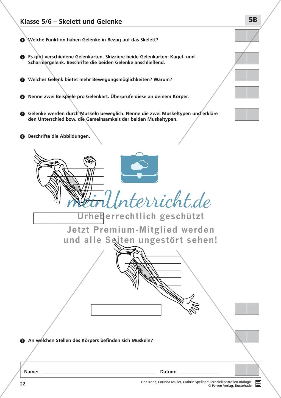 LZK Klasse 5/6 zum Thema Skelett und Gelenke Preview 2