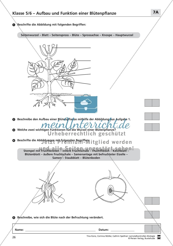 LZK Klasse 5/6 zum Thema Aufbau und Funktion einer Blütenpflanze Preview 1