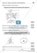 LZK Klasse 5/6 zum Thema Aufbau und Funktion einer Blütenpflanze Thumbnail 1