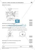 LZK Klasse 5/6 zum Thema Aufbau und Funktion einer Blütenpflanze Thumbnail 2