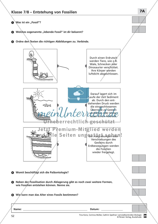 LZK Klasse 7/8 zum Thema Entstehung von Fossilien Preview 1