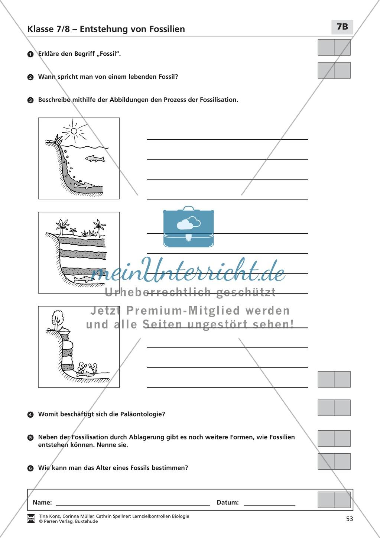 LZK Klasse 7/8 zum Thema Entstehung von Fossilien Preview 2