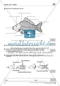 Fische Preview 1