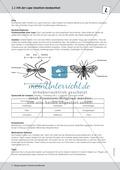 Strukturen von Insekten kennen lernen - ein Versuch Thumbnail 1