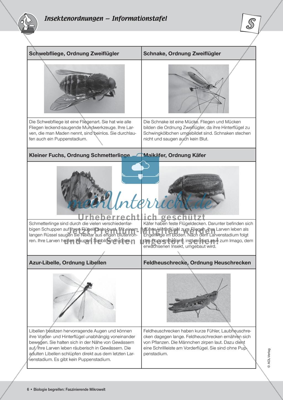 Strukturen von Insekten kennen lernen - ein Versuch Preview 3