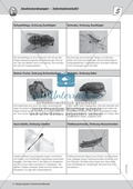 Strukturen von Insekten kennen lernen - ein Versuch Thumbnail 3