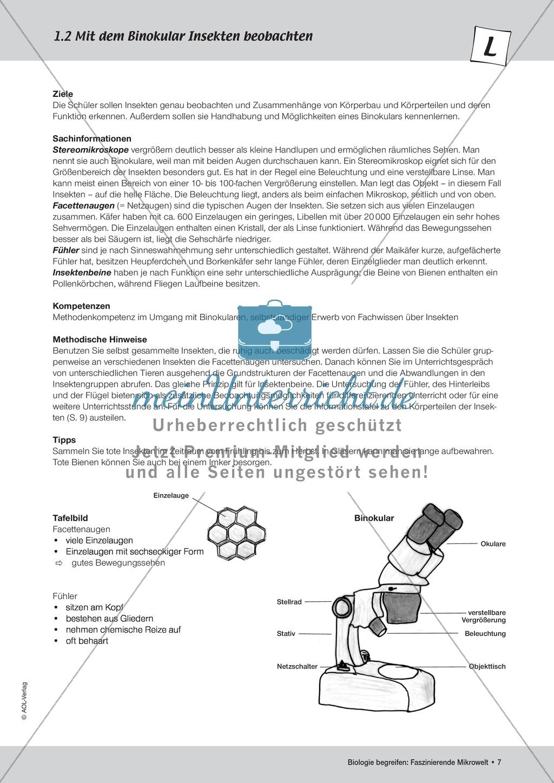 Mit dem Binokular Insekten beobachten - ein Versuch - meinUnterricht