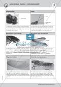 Mit dem Binokular Insekten beobachten - ein Versuch Thumbnail 3