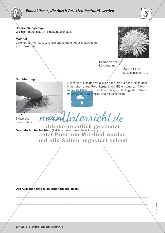 Famous Arbeitsblatt Auf Insekten Vignette - Kindergarten ...
