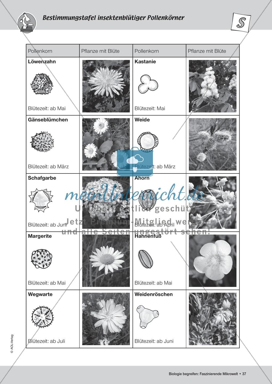 Bestäubung von Pollenkörnern durch Insekten Preview 3