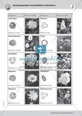 Bestäubung von Pollenkörnern durch Insekten Thumbnail 3