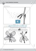 Bestäubung von Pollenkörnern durch Insekten Thumbnail 4