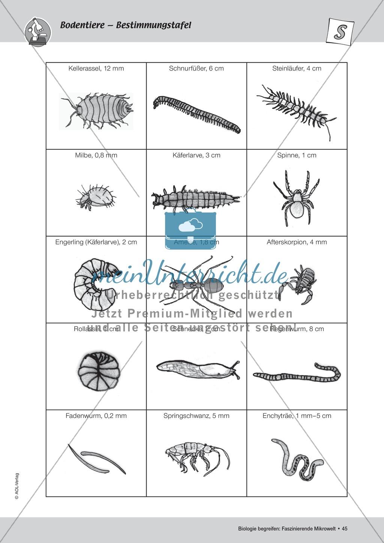 Bodentiere und ihre Funktion bei der Zersetzung Preview 3