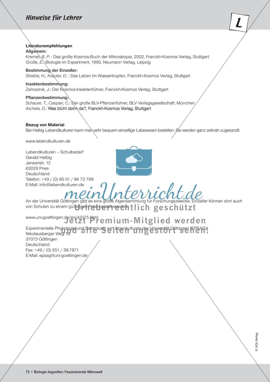 Lackabdruck der Blattunter- und Blattoberseite Preview 3