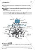 Biologie, Biosysteme im Stoff- und Energiefluss, Ernährung, Ernährungspyramide
