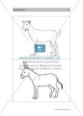 Englischen Wortschatz erarbeiten: animals on the farm + numbers Preview 10