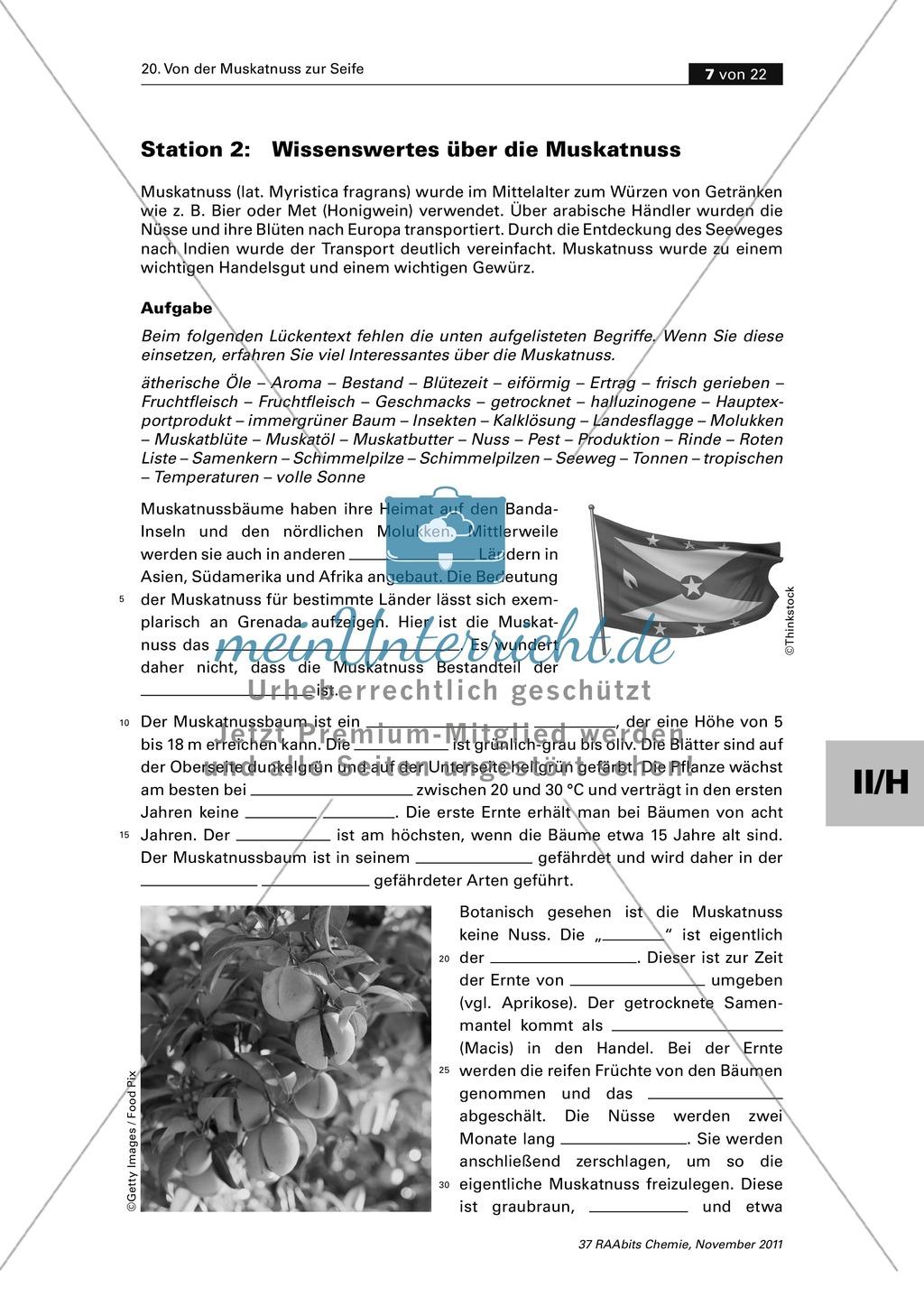 Lipide im Alltag: Lückentext zu Wissenswertem über die Muskatnuss Preview 0