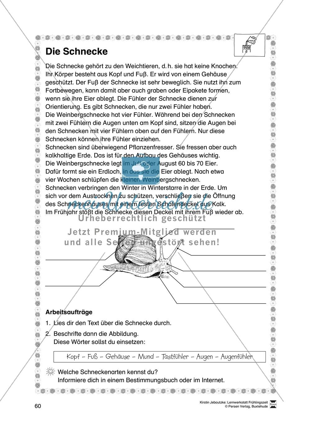 Aufgaben für das Fach Sachkunde zum Thema Frühling Preview 9