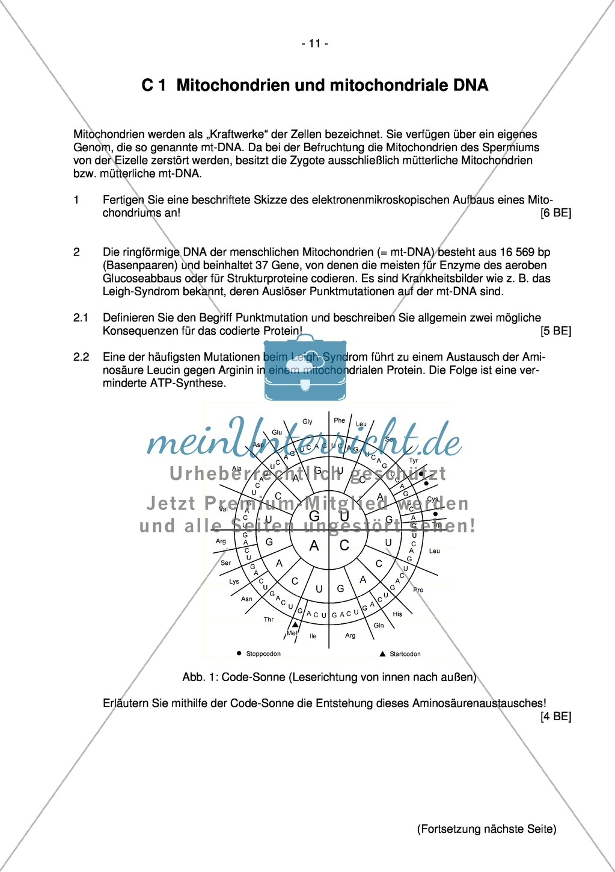 Erfreut Menschlicher Stammbaum Arbeitsblatt Galerie - Super Lehrer ...