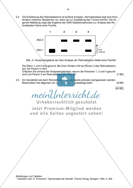 Abituraufgaben Bayern 2012: Aufgaben zu Ökologie, Genetik, Verhalten und Evolution. Mit Arbeitsmaterial. Preview 6