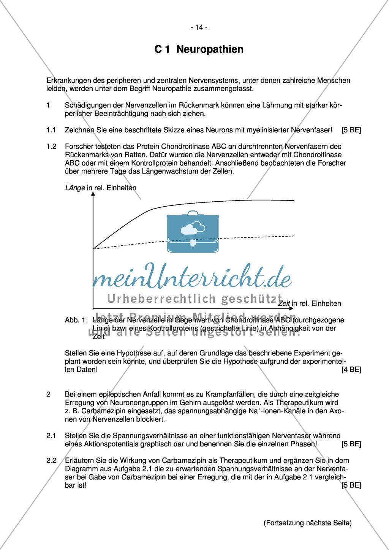 Abituraufgaben Bayern 2013 zu Neurobiologie,Verhalten,Genetik,Physiologie Preview 12