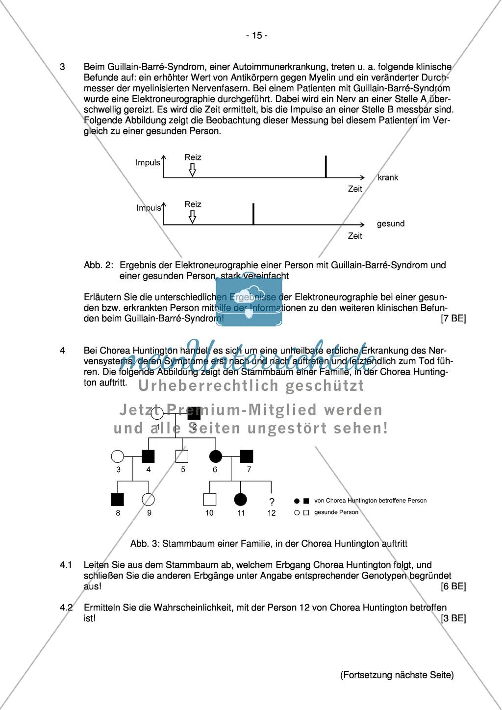 Abituraufgaben Bayern 2013 zu Neurobiologie,Verhalten,Genetik,Physiologie Preview 13